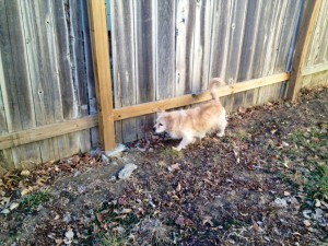 Stop Dog From Barking At Fence Line